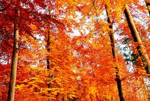 We Love Seasons: Autumn / by Emily Button