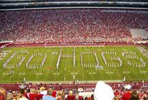 GO HOGS! / by Sara Waddell