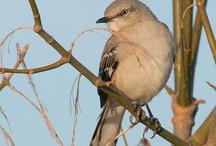 TEXAS BIRDS / by Joanne Carter