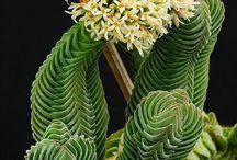 Del amarillo al azul: verde / Flores en la gama de los verdes y los colores que los componen / by Andrómeda Floristería Creativa