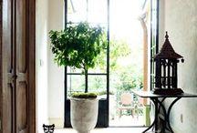 Indoor Plants... / by Iris Midler McCallister
