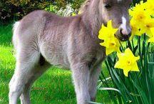 ✌ Cute Animals ✌ / Bark, Hiss, Roar! Animals always delighting!  / by Ella Carlton