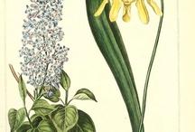 botanical / by Heidi Tucker