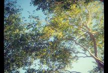 My nature photos / by Tina Kenna