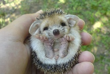 All Creatures Great and Small / by Shelly Nicoloff