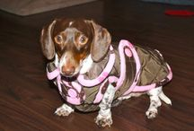 great pet stuff on Etsy / by Humboldt Pet Supply