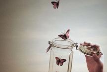 butterfly / by Yulia Litvinova