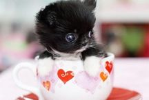 Sometimes i google puppies. / by Kristi Klemm