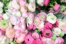 Flowers / by Susan Rajkowski