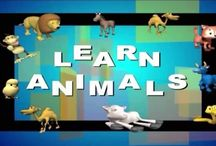 Learn About The Animal Kingdom / by Navin Daswani