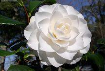 New Green & White Garden / by Katherine Stone