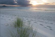 :: dune grass :: / by Beach & Boho