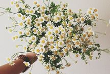 Flowers & Plants / by Melissa Anthony