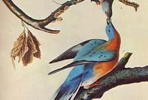 Birds / by stephen smith
