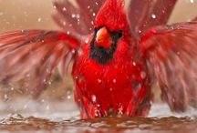 cardinals and other birds / by Rhonda Medford