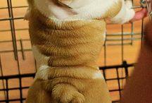 Cute animals :) / by Alissa Warehime