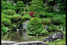 Garden. / by Lauren Cole
