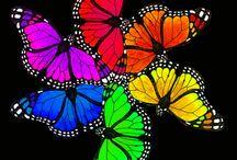 Butterflys / by Pauline Fallon
