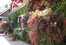 Garden & Landscaping Ideas / by Shannon Hadley Tester