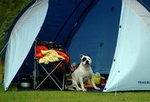 Bring the dog -CAMPING / by WALK SIMPLY Outdoors, Hiking, Walking, Play