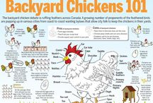 Backyard Chickens / by Eli King Fitness