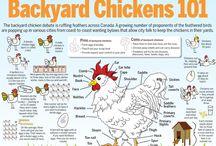 Backyard Chickens / by Eli King Fitness