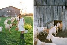 animal love / by Kristyn Binns