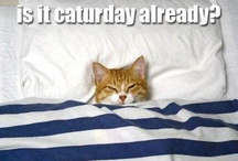Cat-isms / by Megan Hubany