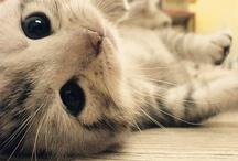 Furry Cuteness / by Kyra Wilson