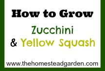 how to grow things / pin how to grow... / by Angie Jorgensen