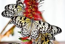 butterfly's / by Cynthia Hekman