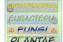 Classification unit / by Brandi Matthews