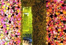 Flowers / by Rita Conti McMenemy