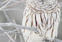 OWL / by Henna Design