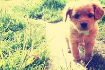 Future Puppies! / by Sam Mucha