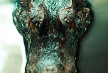 Crocodiles / by Janice Pinder