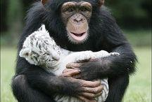 precious animals / by Jodi Kay Hansen