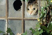 windows / by Tove Andersen