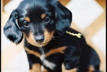 Love those Dachshunds / by Steve Olpin