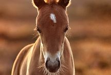 Horses / One of my favourite animals, tied with dogs. / by Jessica