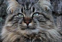 Cats / by David Frischman