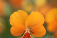 flowers / by Retha Venter