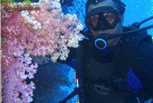 Fiji the Soft Coral Capital / by Jean-Michel Cousteau Resort, Fiji