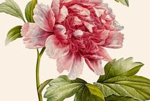 Botanical prints / by Pink Hippo Quilts