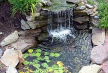 My water garden. / by Amber Taylor