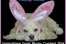 Easter Dog Photos / by Fidose of Reality