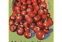 apples / by Paula McDaniel
