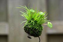 Moss and Bonsai / by Jann Selleck