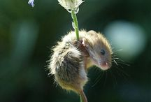 Just TOO cute! / by Lori Langlois Fryns