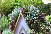 garden / by Julia Wallace